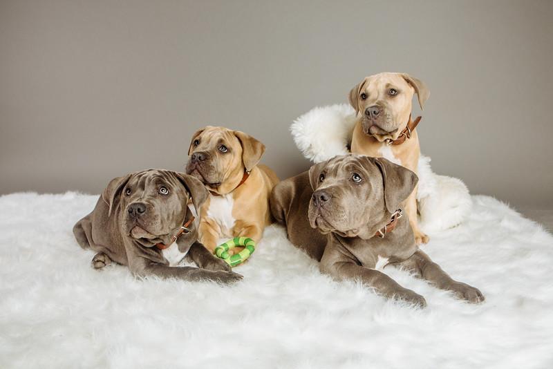 badap-puppies-45.jpg