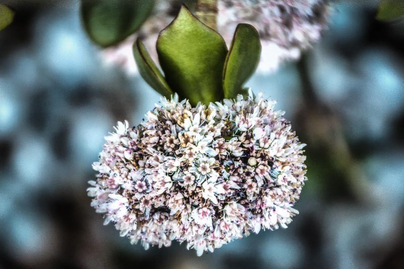 January 20 - Flower.jpg