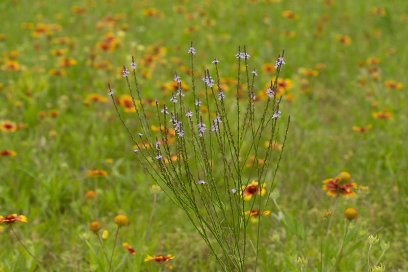 Prairie View 2 May 2020-04899.jpg