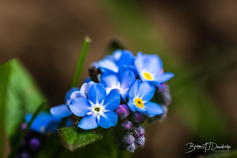 Macro_Spring-flowers-1441-Edit.jpg