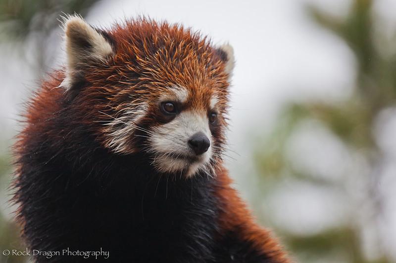 zoo_june4-4.jpg