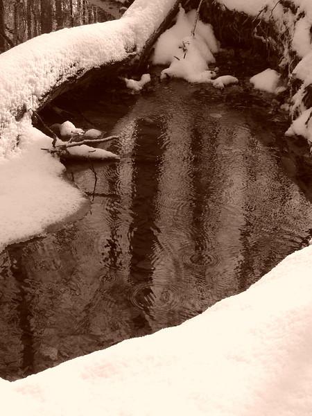 snow 120905 007.jpg