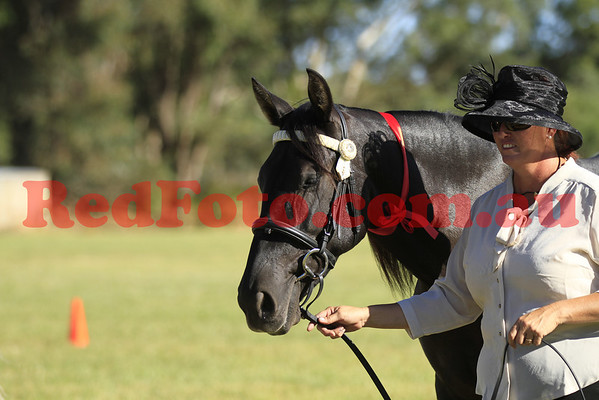 Andalusians Nationals