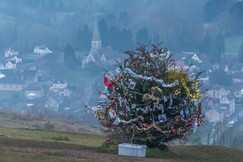Dog's Christmas Tree-7600.jpg