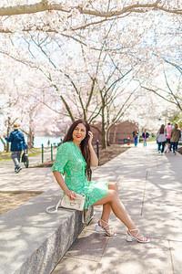 Cherry Blossoms 2020