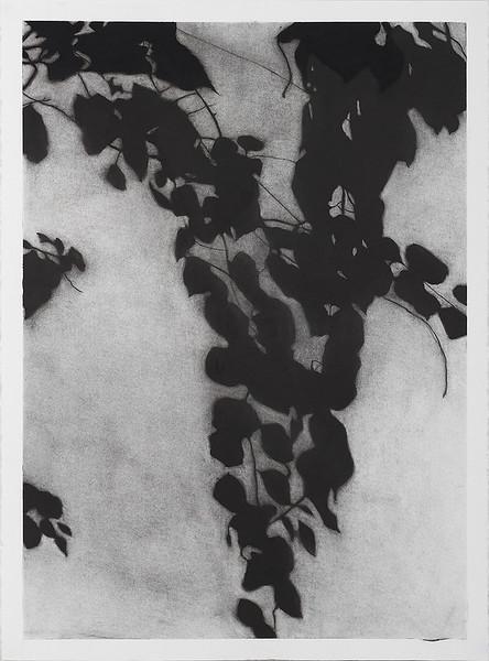 7.Kathryn Ryan Shadow Leaves #3, charcoal on paper 72 x52cm 2013 _25CM-X2.jpg