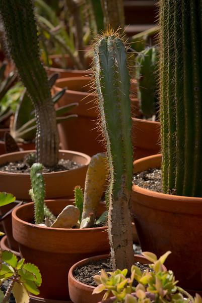 htx-cactus-space013.jpg