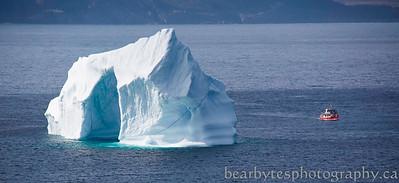 Iceberg hunting in St. John's
