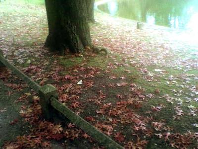 Au Parc Bordelais