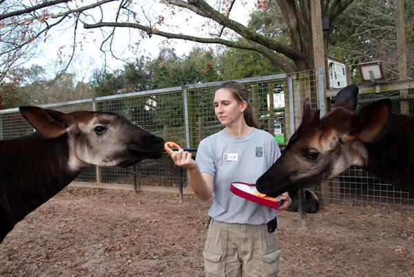 2010-Okapi Get Valentine's Day Treats