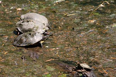 Memorial Day Central Park NY 2008