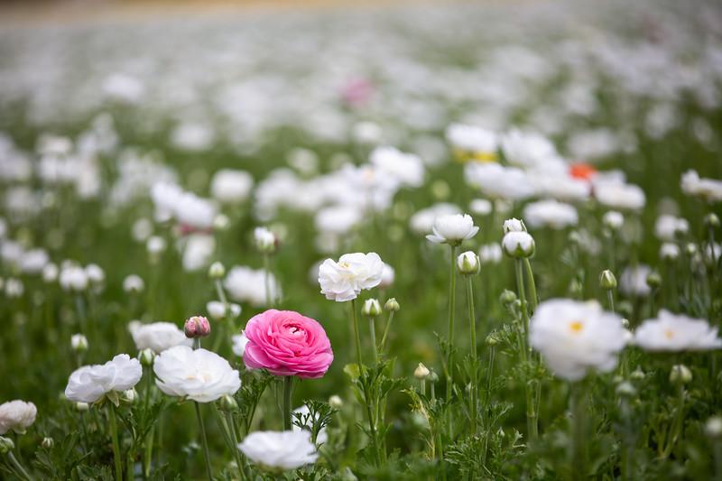 Spring Flowers B-314.jpg