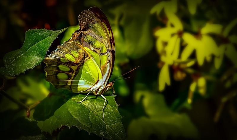 Butterfly-040.jpg