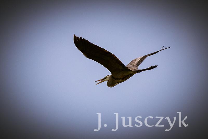 Jusczyk2021-9588.jpg