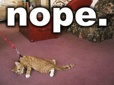 Nope-Cat-Meme-04.jpg