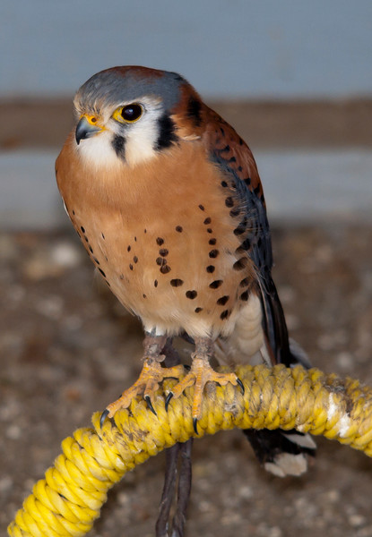 Alberta Bird of Prey Rehab Centre (Lethbridge)