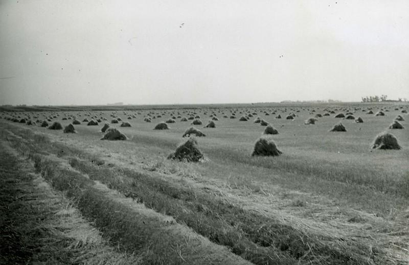 JA148.  Crop - Arthur - 1940‡.jpg