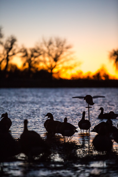 Lucky Duck Premium Decoys