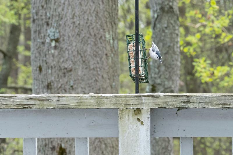 birdfeeder-7339.jpg