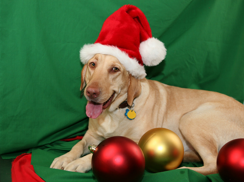 29- Honey Celebrates Christmas (Mitcheff) HI RES