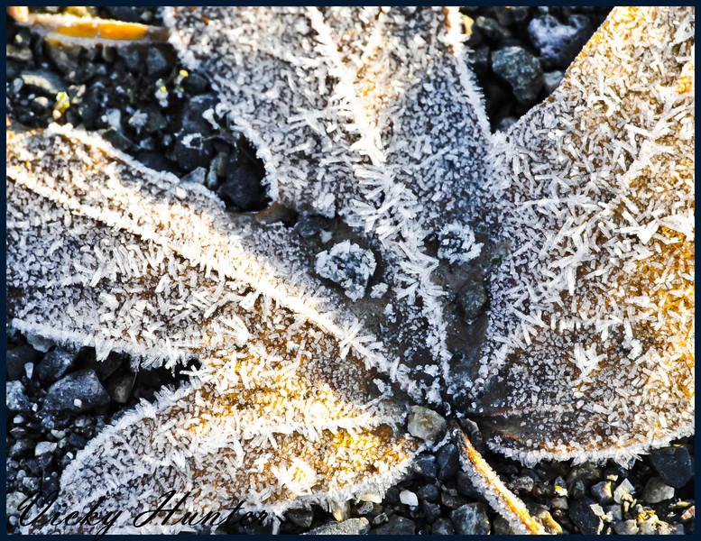 leaf_snowflake.jpg