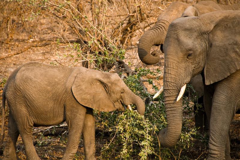 elephants (5).jpg