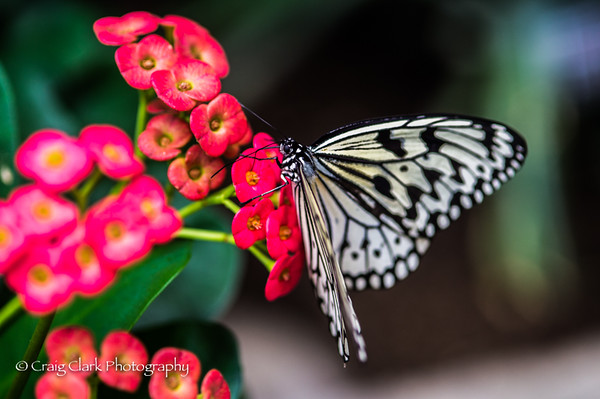 Butterfly Gardens 2