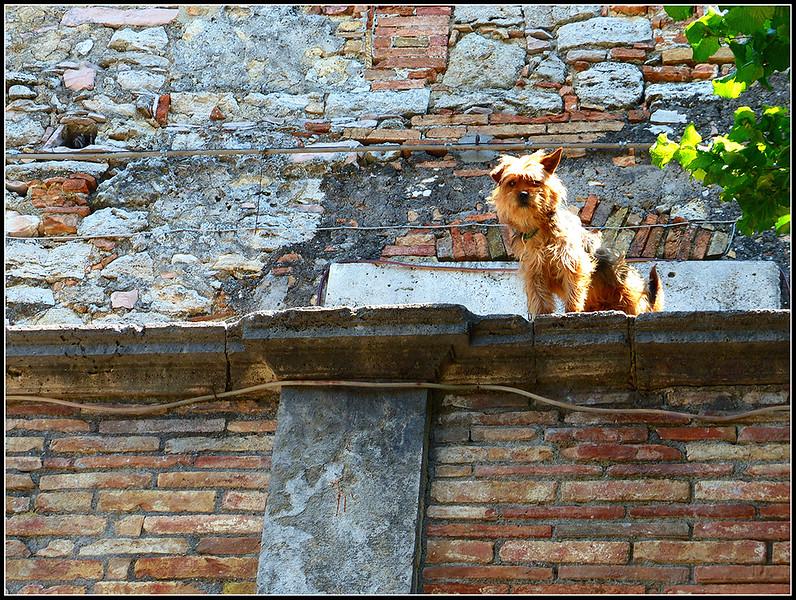 2015-05-Civitella-Lago-065.jpg