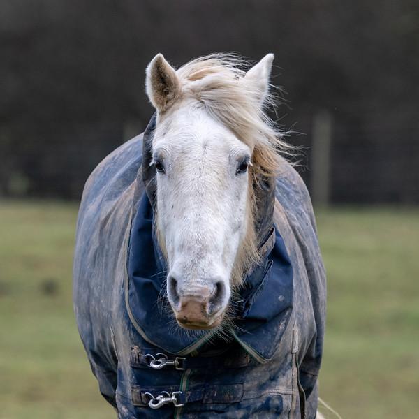 Knepp Horse-12.jpg