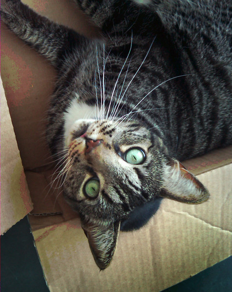 Cat in a Box 2.jpg