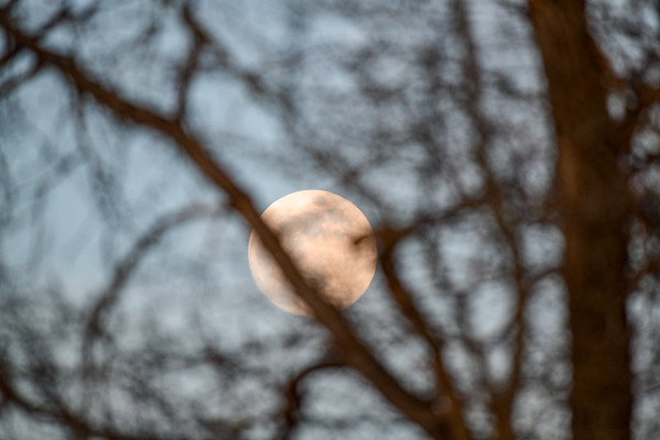 4-28-18 Moon Through The Trees - Focused