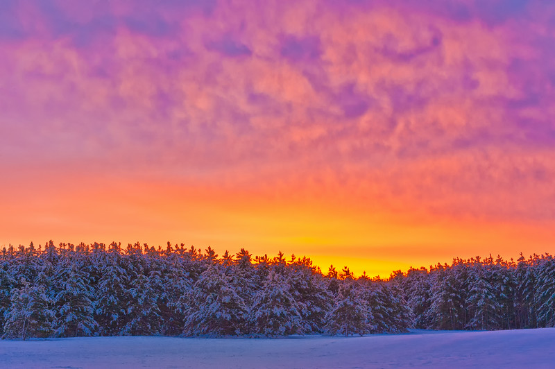 sunrise on pines in winter_Jan 28-2012_01-2.jpg