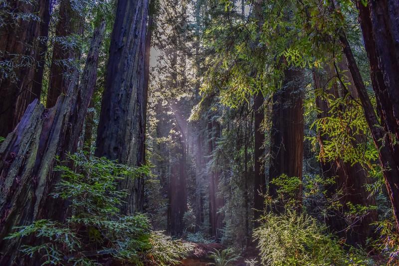 fun things to do in northern california - muir woods