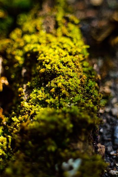 Moss on the Tree 3