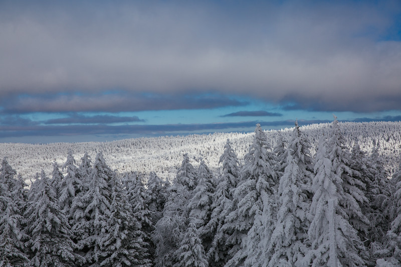 2020-02-01_SN_KS_Frosty Trees-0405.jpg