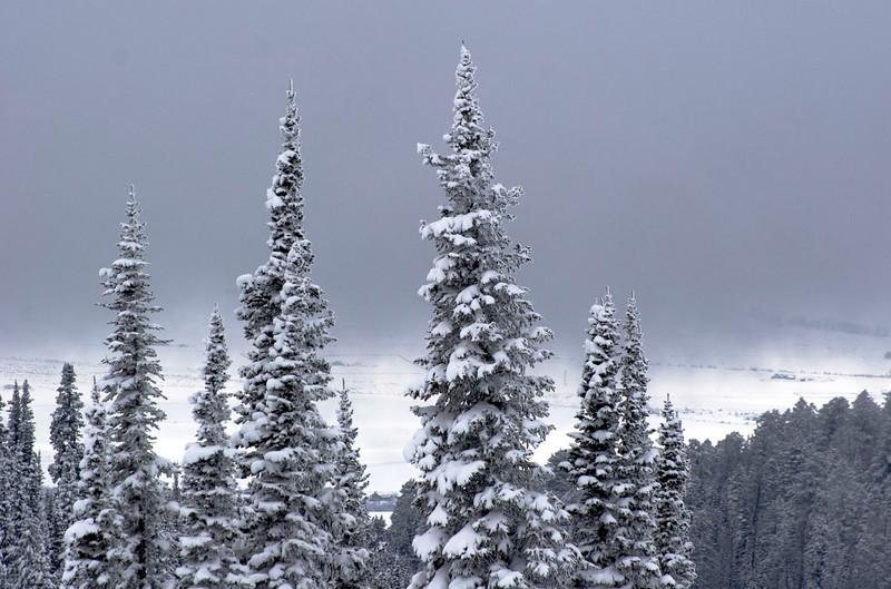 trees-fog1.jpg