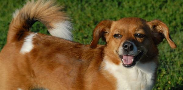 2010-06-24 Denville Dog Park