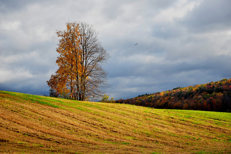 Autumn Landscape in the Finger Lakes Area.