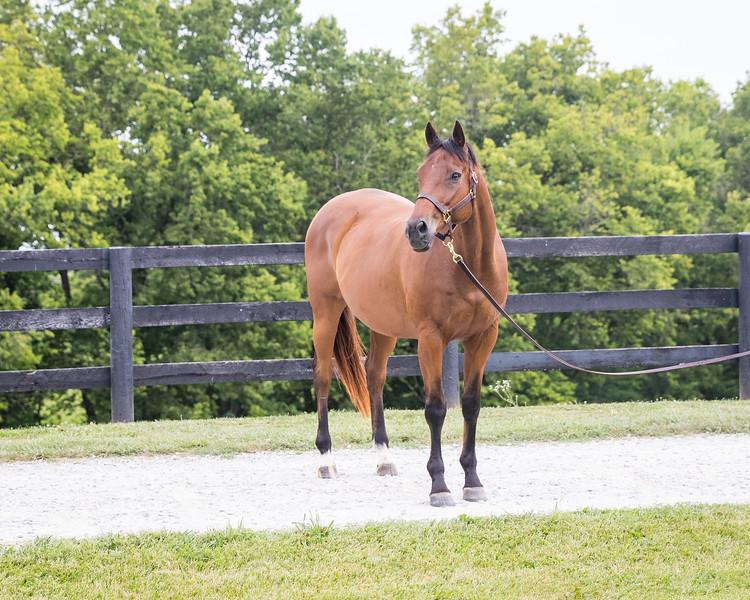 17_0622_Horse_mw-0833.jpg