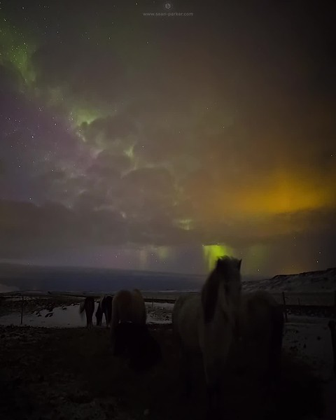 Iceland Aurora over Horses 4k