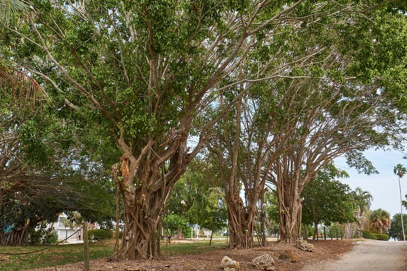 Useppa-Botanical-Walk-251.jpg