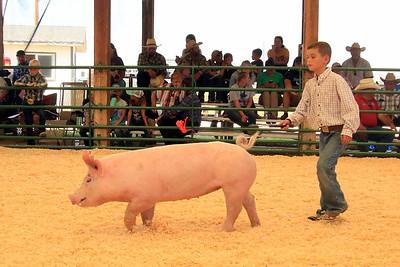 Swine Photos
