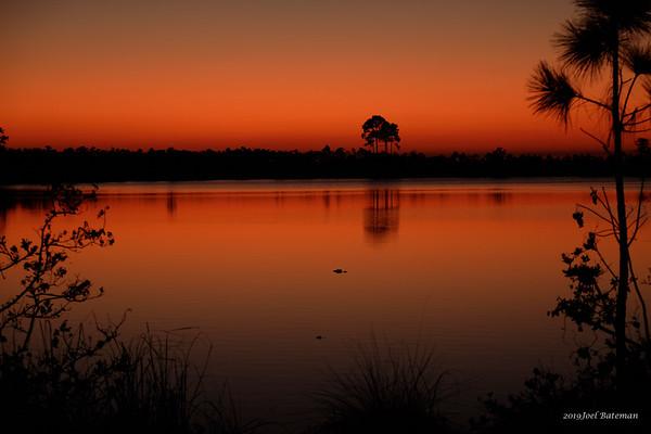 Everglades - 3