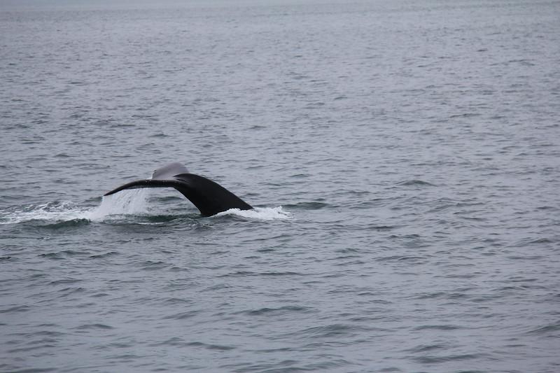 20160717-052 - WEX-Whales.JPG