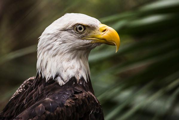 Busch Wildlife 2013 - Sigma 50-500