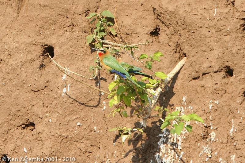 20070924-OurBotswanaMashatu-125-2