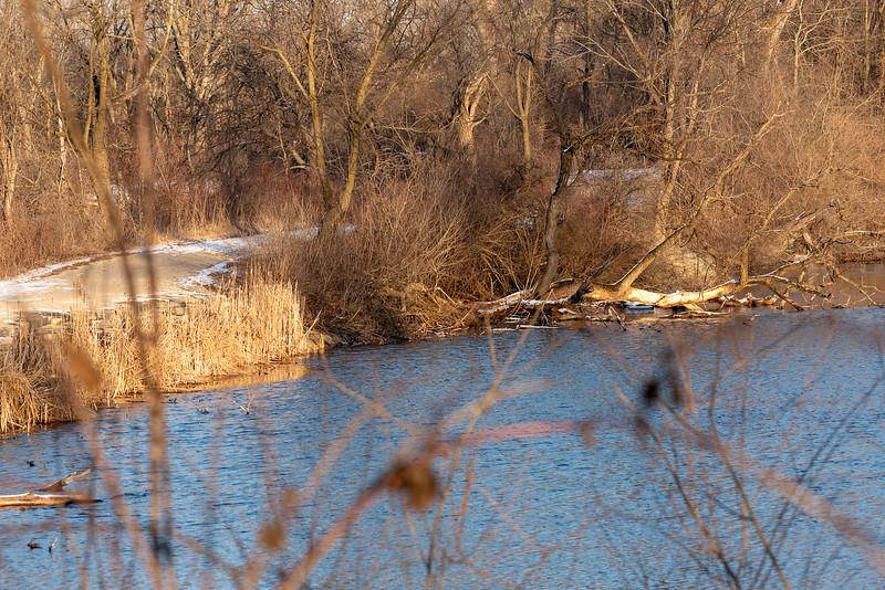 Pratt's Wayne Woods, DuPage County, IL