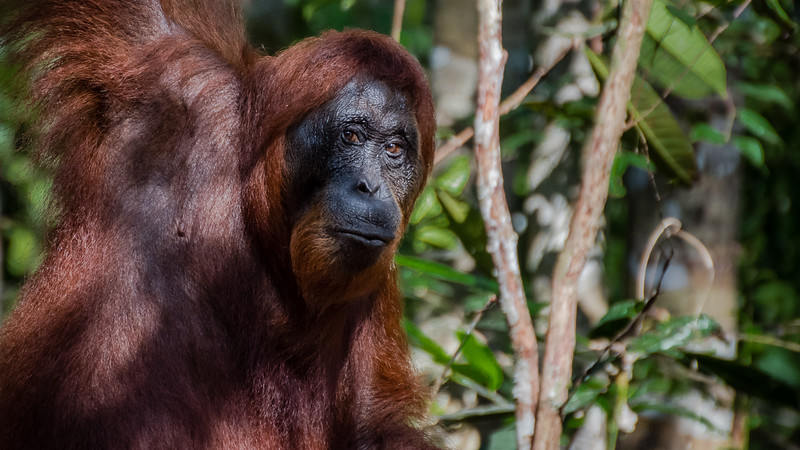 Borneo-2264.jpg