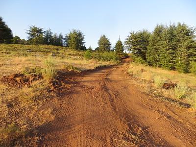 10_Cedars Hike July5 2017
