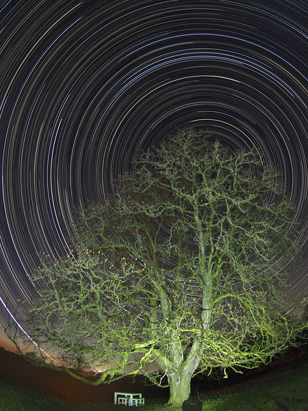 Oak Tree Star Trail